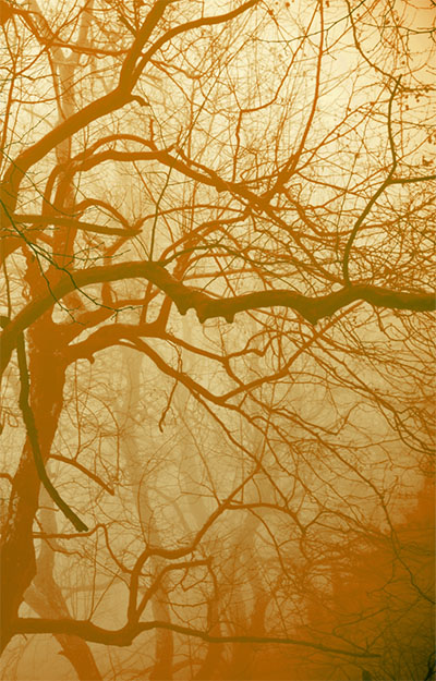 Sharpwaist & Marabou Stork – Cold Shots C60 [Existence Establishment]